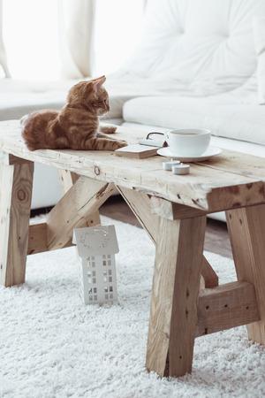 静物詳細、素朴なベンチにコーヒーのカップと白いコテージ ルームでそれの上に横たわって猫 写真素材