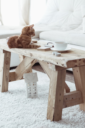 comfortable cozy: Still life details, cup of coffee on rustic bench and a cat lying down on it in white cottage room