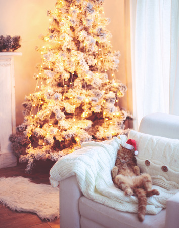 Lovable ginger cat wearing Santa Claus hat sleeping on chair near Christmas tree at home interior photo