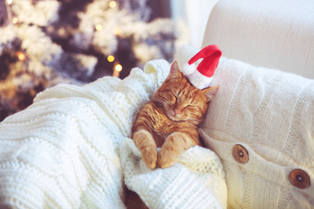 christmas house: Lovable ginger cat wearing Santa Claus hat sleeping on chair under Christmas tree at home