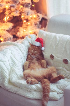 Lieve gember kat dragen Santa Claus hoed slapen op een stoel in de buurt van Kerst boom thuis