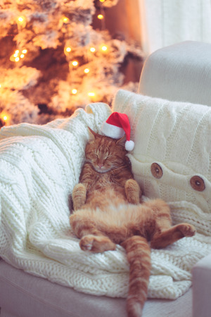Lovable ginger cat wearing Santa Claus hat sleeping on chair near Christmas tree at home Stok Fotoğraf