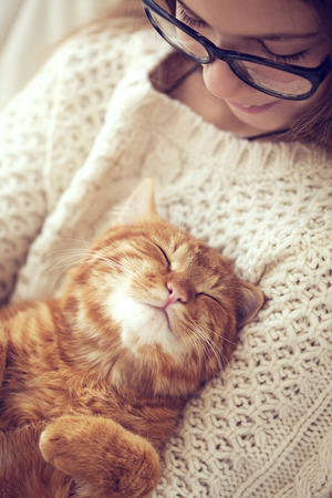 귀여운 생강 고양이는 자신의 주인의 손에 니트 스웨터 온난화 잔다 스톡 콘텐츠