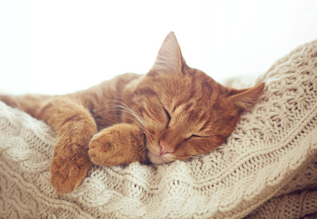Cute ginger cat sleeps on warm knit sweater
