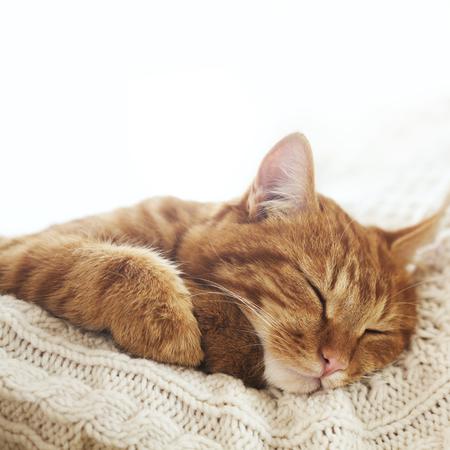 Cute ginger cat sleeps on warm knit sweater