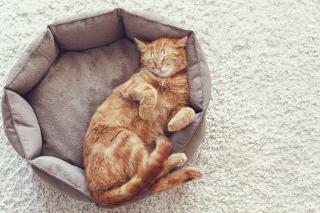 A ginger cat sleeps in his soft cozy bed on a floor carpet Imagens
