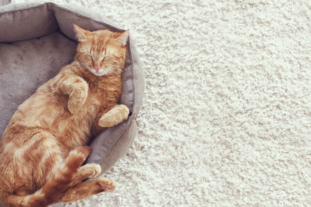 A ginger cat sleeps in his soft cozy bed on a floor carpet Standard-Bild