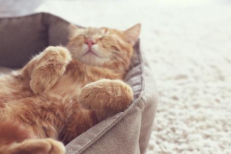Een gember kat slaapt in zijn zachte gezellige bed op een vloer tapijt, soft focus Stockfoto