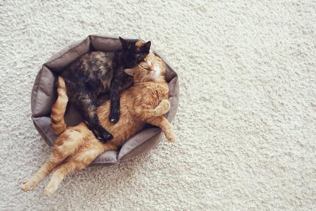 Paar katten slapen en knuffelen in hun zachte gezellige bed op een vloer tapijt Stockfoto