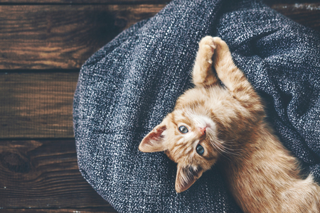Cute little ginger kitten is resting in soft blanket on wooden floor and looking at camera Foto de archivo