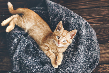 Cute little ginger kitten is resting in soft blanket on wooden floor and looking at camera Stock Photo