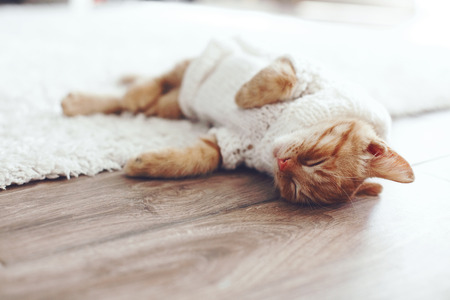 Cute little ginger kitten wearing warm knitted sweater is sleeping on the floor Stock Photo