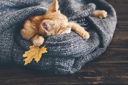 Cute little imbir kotek śpi w miękkim kocem na drewnianej podłodze