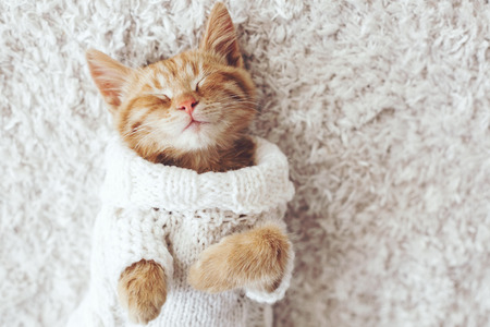 Cute little ginger kitten wearing warm knitted sweater is sleeping on the white carpet Фото со стока