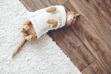 温かみのあるニットのセーターを着ているかわいい小さな生姜子猫はトップ ビュー ポイント、床で寝てください。