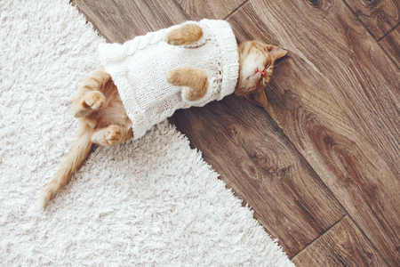 Cute little ginger kitten wearing warm knitted sweater is sleeping on the floor, top view point