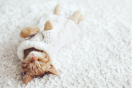 Cute little ginger kitten wearing warm knitted sweater is sleeping on the white carpet 免版税图像