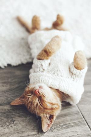 温かみのあるニットのセーターを着ているかわいい小さな生姜子猫は床に寝ています。