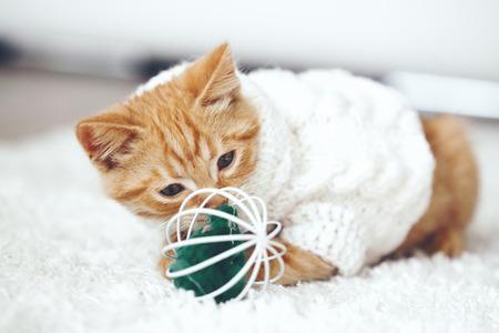 Schattige kleine gember kitten het dragen van warme gebreide trui speelt met huisdier speelgoed op wit tapijt