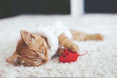 Nette kleine Ingwer Kätzchen tragen warme Strickjacke mit Tierspielzeug auf weißem Teppich schlafen
