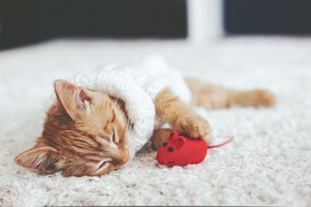 Cute little ginger kitten wearing warm knitted sweater is sleeping with pet toy on white carpet Stockfoto