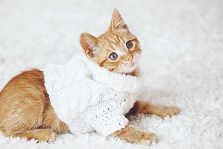 kitten: Cute little ginger kitten wearing warm knitted sweater is playing on white carpet