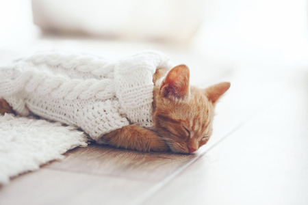 warm home: Cute little ginger kitten wearing warm knitted sweater is sleeping on the floor Stock Photo