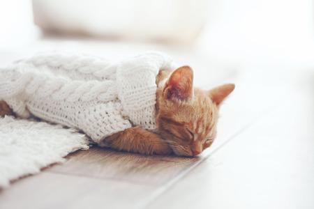 Cute little ginger kitten wearing warm knitted sweater is sleeping on the floor Stock fotó