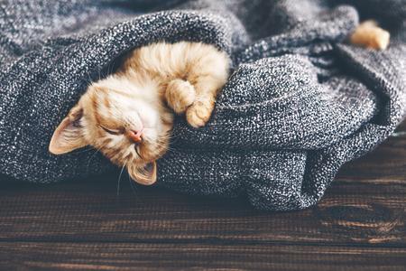 Cute little ginger kitten is sleeping in soft blanket on wooden floor