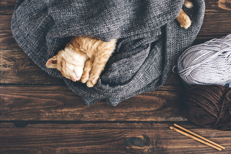 cute kitten: Cute little ginger kitten is sleeping in blanket on wooden background