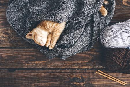 kitten: Cute little ginger kitten is sleeping in blanket on wooden background