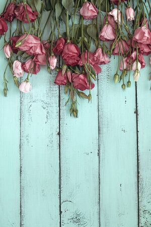 Pink eustoma flowers on mint wooden background, selective focus, shabby chic style, space for custom text. Imagens