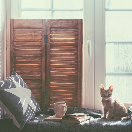 cat: Warm and cozy window seat with cushions and a opened book, light through vintage shutters, rustic style home decor.