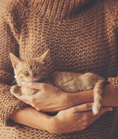 Nette Ingwer Kätzchen schläft auf den Händen seiner Besitzer in der warmen Strickjacke