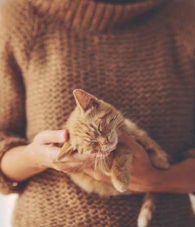Cute ginger kitten sleeps on his owners hands in warm sweater