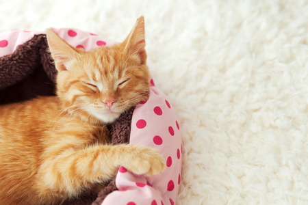 cute kitten: A ginger kitten sleeps in his soft cozy bed on a white carpet, soft focus
