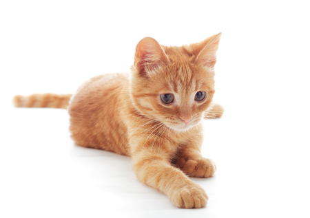 Cute ginger kitten lying isolated on white background