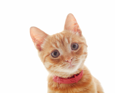 Cute ginger kitten face isolated on white background