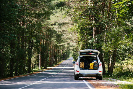 Car with full trunk of backpacks on a forest road among trees Stock Photo