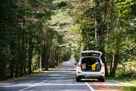 completo: Coche con plena tronco de mochilas en un camino forestal entre los árboles