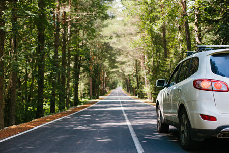 Řízení auta na lesní asfaltové cestě mezi stromy