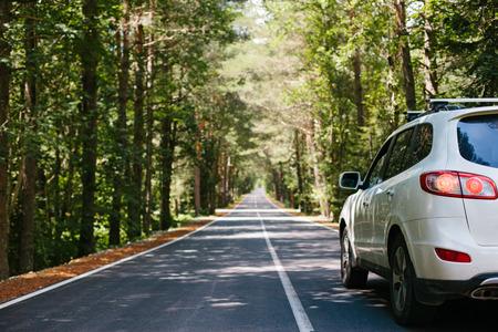 Вождение автомобиля по асфальтовой дороге леса среди деревьев