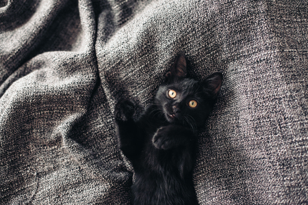 lays down: Cute little black kitten lays down on grey blanket Stock Photo