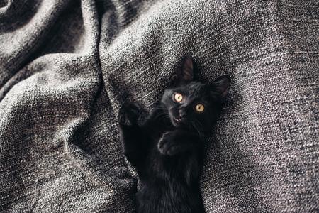 Cute little black kitten lays down on grey blanket Stok Fotoğraf