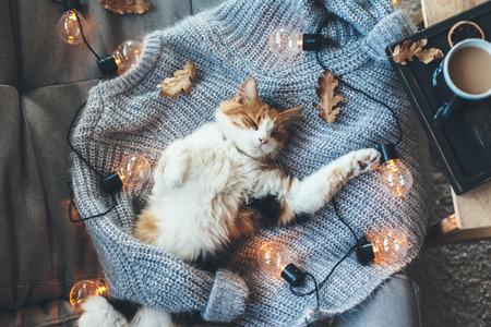 Gato perezoso está durmiendo en un suéter de lana suave en el sofá, decorado con luces LED. Concepto del fin de semana del invierno o del otoño, visión superior. Foto de archivo - 85971667