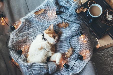 Gato perezoso está durmiendo en un suéter de lana suave en el sofá, decorado con luces LED. Concepto del fin de semana del invierno o del otoño, visión superior. Foto de archivo - 85971674