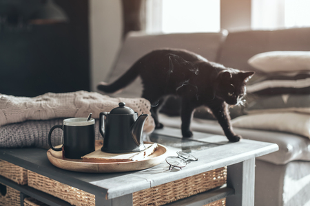 Still life details in home interior of living room. Black cat on coffee table. Cup of tea on a serving tray with steam. Breakfast over sofa in morning sunlight. Cozy autumn or winter concept.