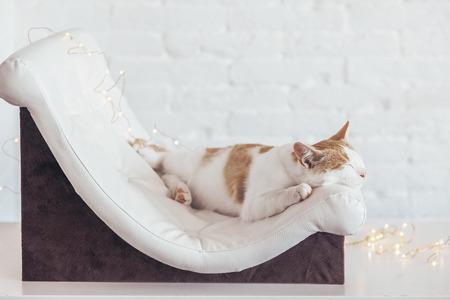 Leren Bank Katten.The Kitten Foto S Afbeeldingen En Stock Fotografie 123rf