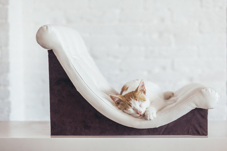 Kitten sleeps on small leather couch in white interior. Cozy furniture for pet. Cats place organization at home. Stock Photo