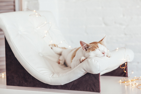 Kitten sleeps on small leather couch in white interior. Cozy furniture for pet. Cat's place organization at home. Banco de Imagens - 86898625